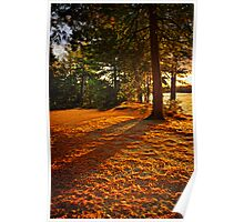 Sunset in woods at lake shore Poster