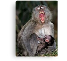Mother and Baby suckling - Macaque Canvas Print