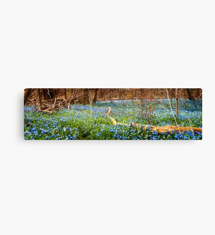 Carpet of blue flowers in spring forest Canvas Print