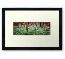 Carpet of blue flowers in spring forest Framed Print