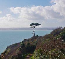 A Lone Tree by lezvee