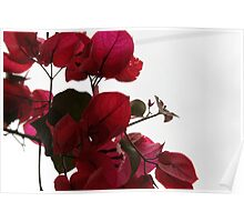 Plant With Red Leaves Poster