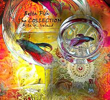 Betta Fish The Collection by Rita  H. Ireland