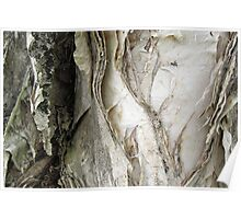 paperbark at the park Poster