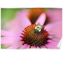 Pollen Gathering Poster