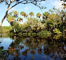 ST LUCIE RIVER by TomBaumker