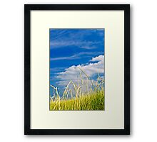 Tall grass on sand dunes Framed Print