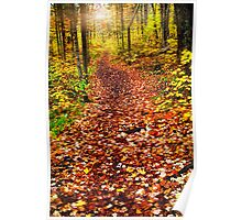 Trail in fall forest Poster