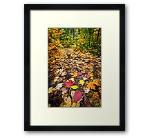 Path in fall forest Framed Print