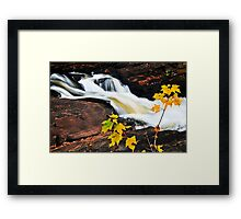 Forest river in the fall Framed Print