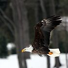 Fly Like an Eagle by Chris Coates