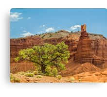 Desert Survivor - Capitol Reef NP Canvas Print