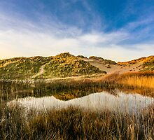 Llangennith Dunes by Pippa Carvell