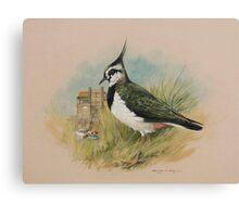 Lapwing at Blakeney, Norfolk Canvas Print