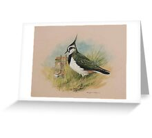 Lapwing at Blakeney, Norfolk Greeting Card