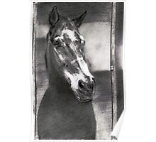 a horse ... pencil Poster
