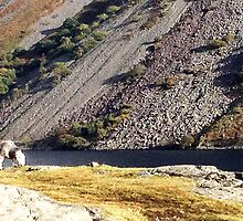 Wast Water Sheep by GeorgeOne