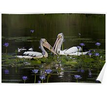 Feeding In The Lilypond Poster