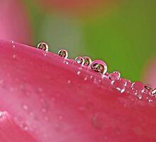 Tulip Pearls by Lynn Gedeon