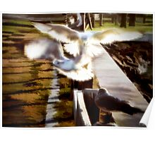Seagulls Sunlight and Seawall Poster