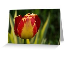 Sparkles and Warmth - a Red and Yellow Tulip in the Spring Rain Greeting Card
