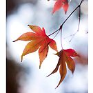 Autumn Leaves 6 - iPad Case by Natalie Broome