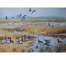Brent Geese, Cley Marshes Photographic Print