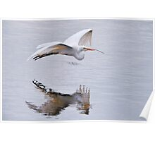 Great White Egret with Nesting Materials Poster