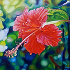 Tropical Hibiscus by Morgan Ralston
