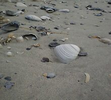 seashells  by silviasunflower
