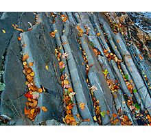 Leaves On the Livermore Overthrust Photographic Print