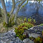Sprouting Moss by Kat Simmons