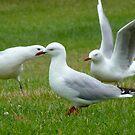 Seagull Shenanigans by Odille Esmonde-Morgan
