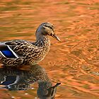 Mallard Duck and Autumn Reflections by Ellen McKnight