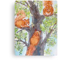 Squirrel Games Canvas Print