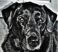 Pencil Dog Photographic Print