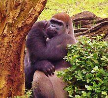 Shy Gorilla by Kat Call-Langworthy