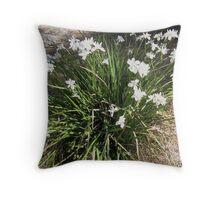 Flower burst of Dietes after the rain. 'Arilka' Mt. Pleasant. Throw Pillow