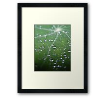 Nasturtium Leaf After Rain Framed Print
