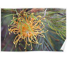 Grevillea Botanic Gardens Poster