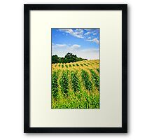Corn field Framed Print