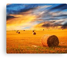 Golden sunset over farm field Canvas Print
