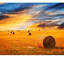 Golden sunset over farm field Photographic Print