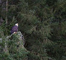 Fraser Valley Bald Eagle Festival by Michael Russell