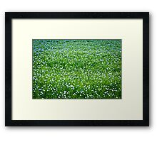 Blooming flax background Framed Print