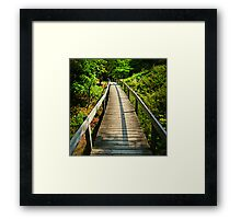 Wooden walkway through forest Framed Print