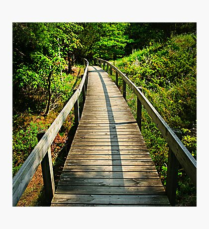 Wooden walkway through forest Photographic Print