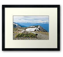 Alpine meadow in Jasper National Park Framed Print