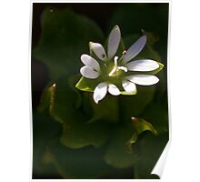 Tiny White Flower Poster