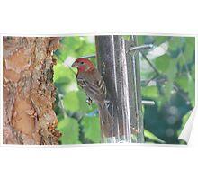 Bird posing on feeder Poster